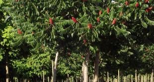 arbre a l'estiu