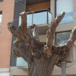arbre mutilat