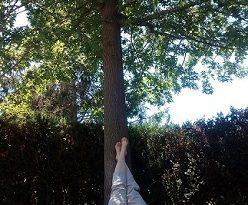 L' ombra fresca d'un roure