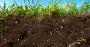 El sòl també respira