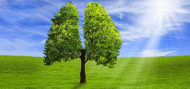 LES PLANTES : Imprescindibles ( primera part ARBRES)
